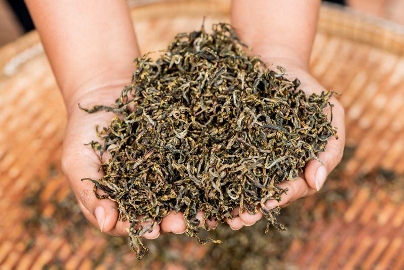 Araksa Tea Garden Chiang Mai - Processing Tea Leaves