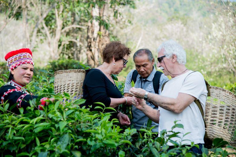 Araksa Tea Garden Chiang Mai - Tea Picking Tour