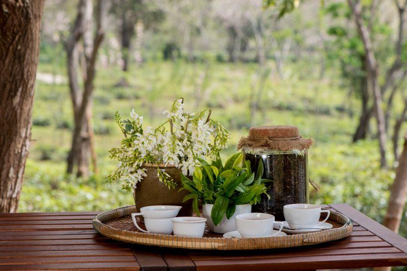 Araksa Tea Garden Chiang Mai - Tea Tasting