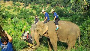 Baan Chang Elephant Paradie Chiang Mai