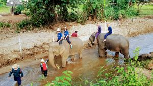 Bareback Elephant Riding in Chiang Mai