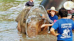 Elephant Care Program Chiang Mai - Dam