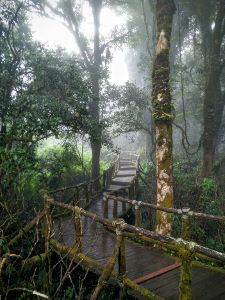 Doi Inthanon National Park - Boardwalk Mist