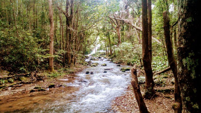 Doi Inthanon National Park - Pha Dok Siew Trail