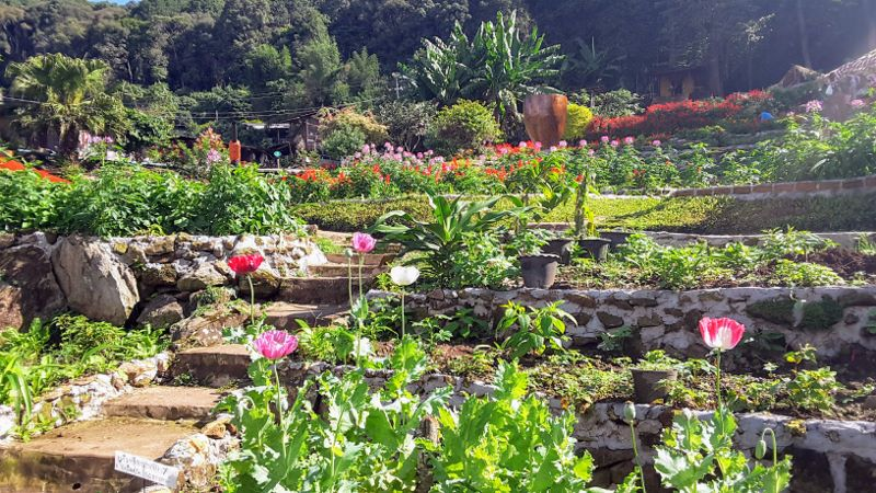 Doi Pui Hmong Village - Garden