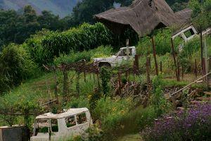 Doi Mon Jam - Garden