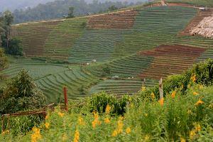 Doi Mon Jam Chiang Mai