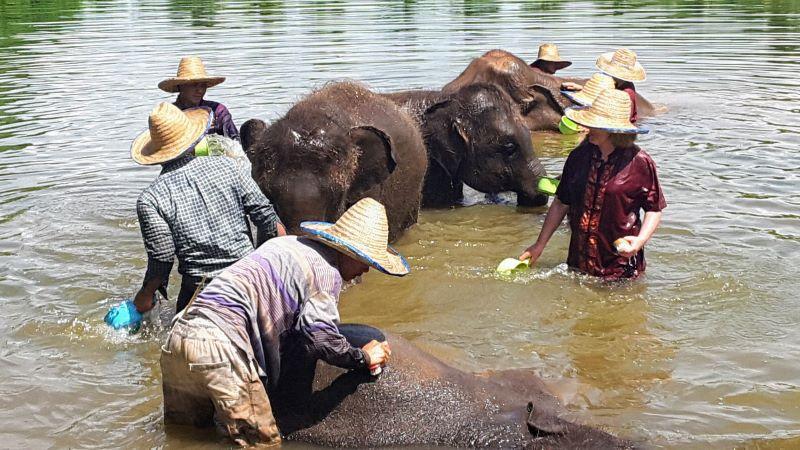 Elephant Rescue Park - Elephant Bathing