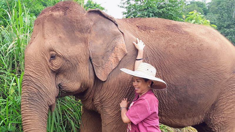 Elephant Rescue Park - Female Elephant