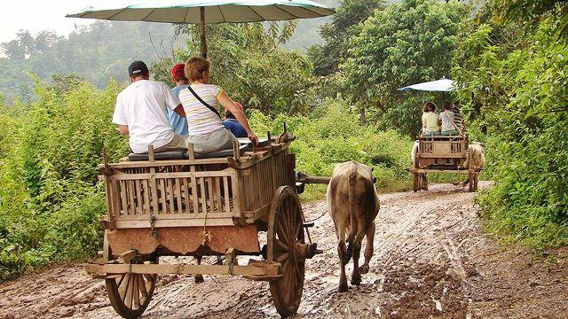 Maetaeng Elephant Park - Ox Cart Ride