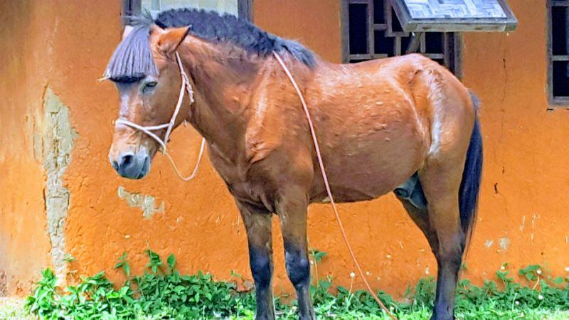 Santichon Chinese Village - Horse