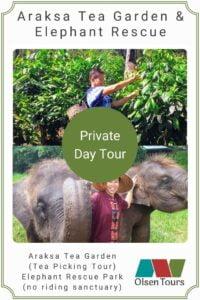 Araksa Tea Gardens & Elephant Rescue Park: Private Day Tour
