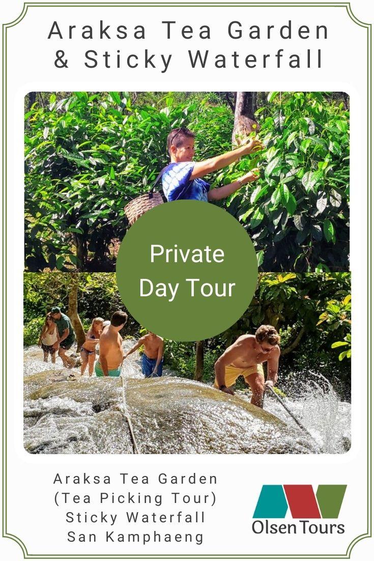 Araksa Tea Gardens & Bua Tong Sticky Waterfall: Private Day Tour