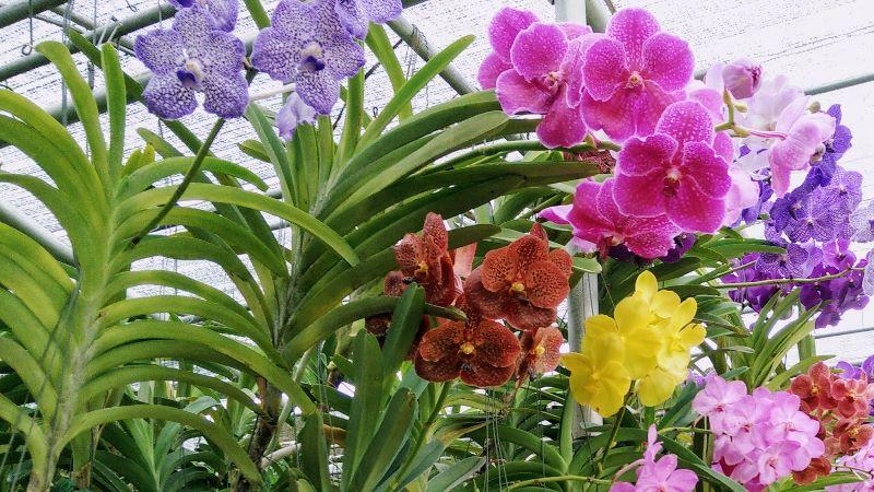 Bai Orchid & Butterfly Farm