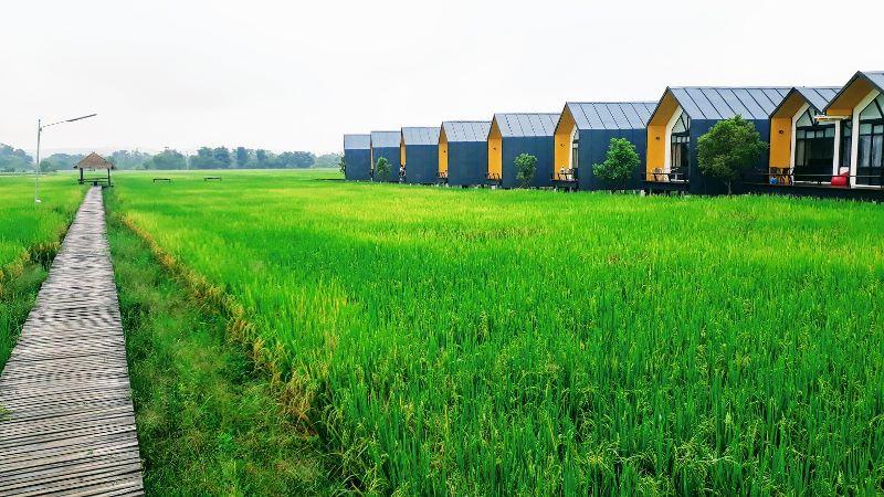 Rice Field Accommodation in Chai Prakan