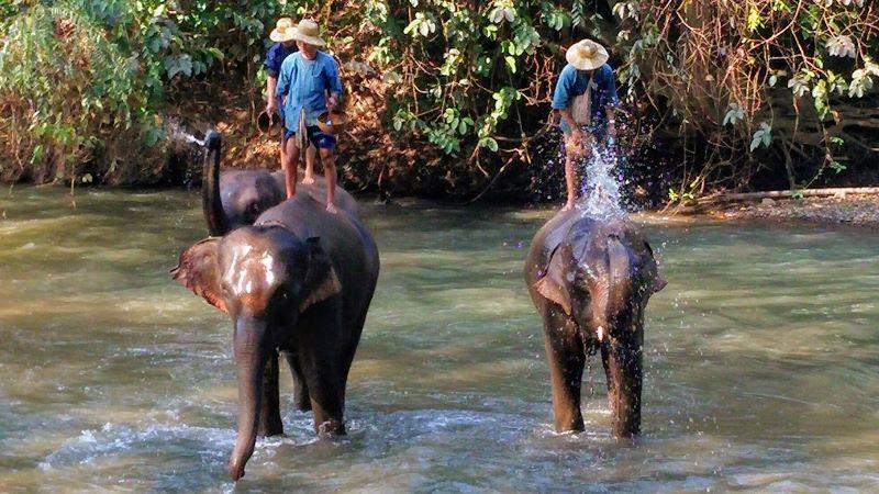 Chiang Dao Elephants
