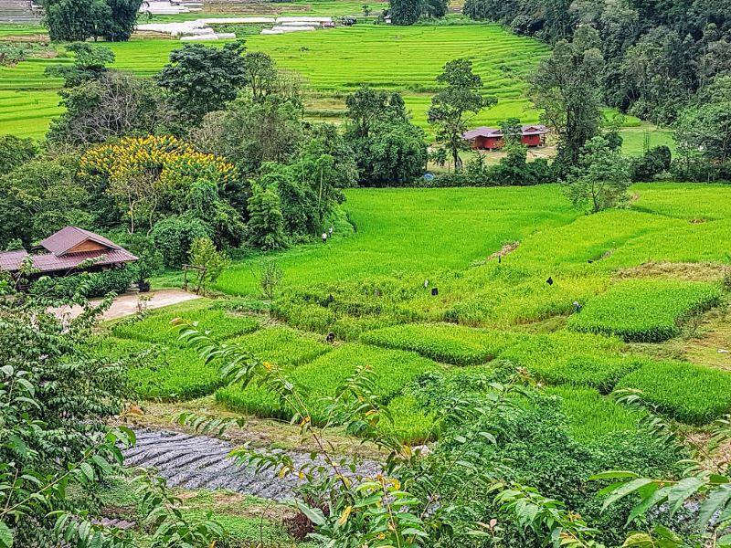 Doi Inthanon - Rice Fields at Mae Klang Luang