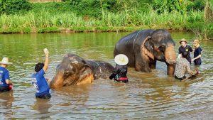 Elephant Care Program Chiang Mai