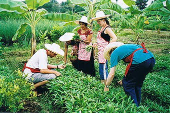 Thai Farm Cooking School - Garden
