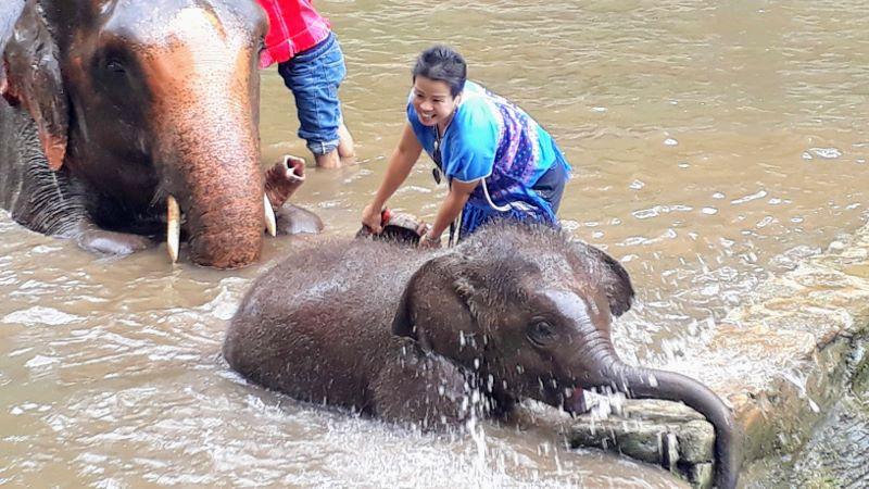 Baby elephant bathing in Chiang Mai