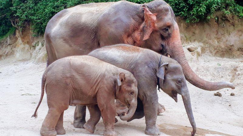 A family of elephants at Patara Elephant Farm