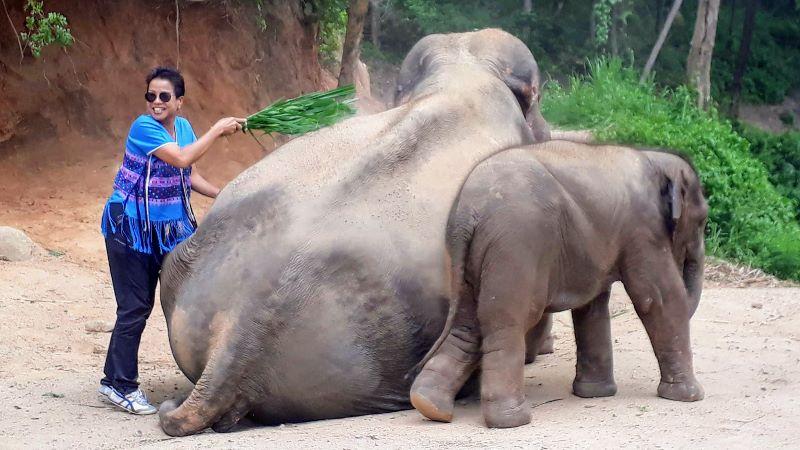 elephant skin care