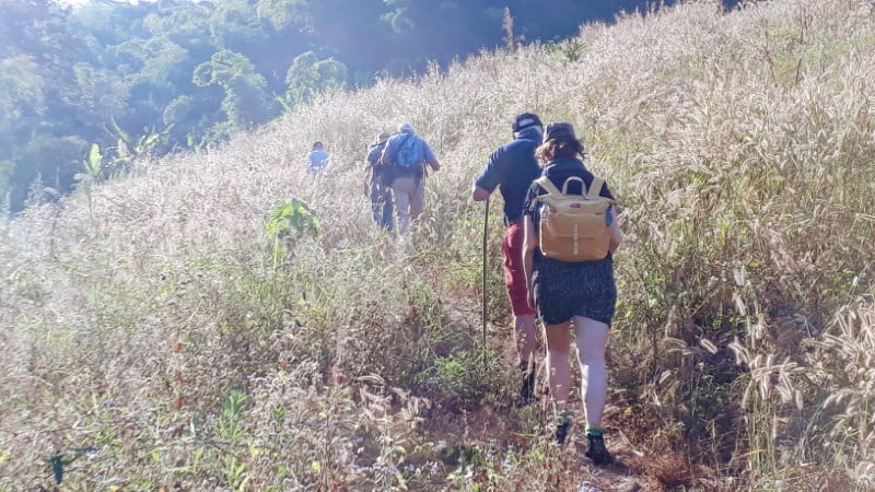 Trekking through grasslands near Bamboo Nest de Chiang Rai