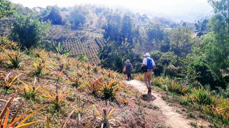 Trekking in pineapple plantation at Ban Cha Cho